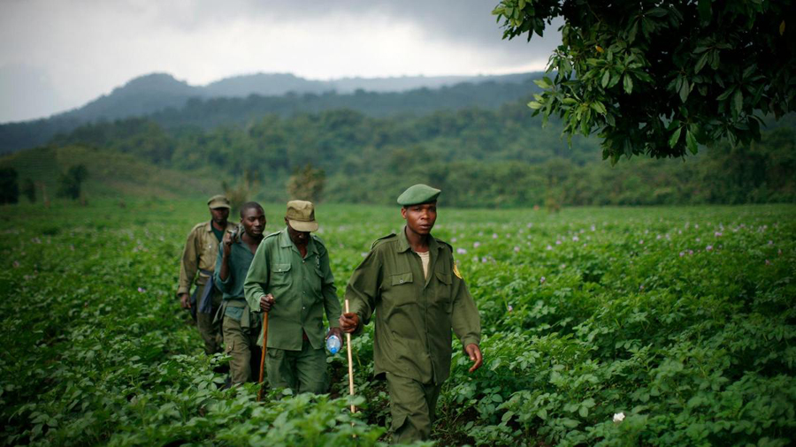 Virunga National Park ranger / © Ryan Carter The National